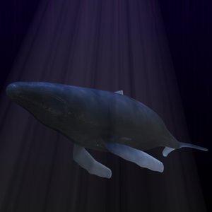 whale 3d lwo