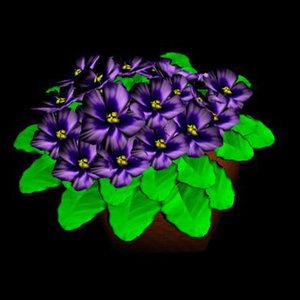 african violets 3d max