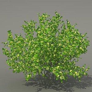 busch shrub 3d max