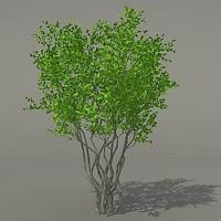 busch shrub max