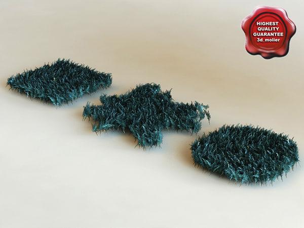 juniperus horizontalis 'blue chip' 3d model