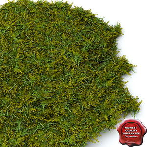 3d model juniperus chinensis 'gold coast'
