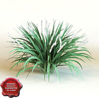3d model liriope muscari 'monroe white'