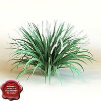 3d model of shrub Liriope Muscari 'Monroe White'