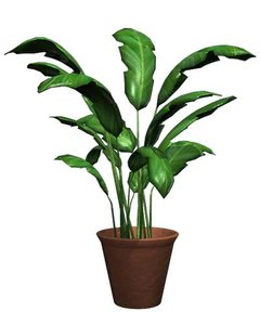 potted plant houseplant ma