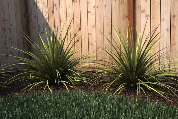 ornamental grass maxwell render max