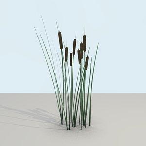 3d model cattail plant