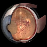 eye segmented anatomically 3d ma