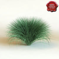 3d model of shrub Festuca Amethystina