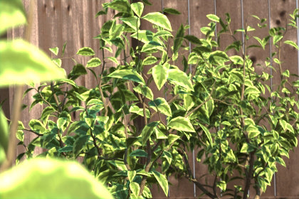 3d model shrubs ready - 4