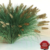 3d model of shrub Pennisetum alopecuroides 'Hameln'