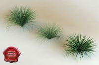tripsacum dactyloides 'dwarf' modelled 3d 3ds