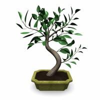 bonsai tree 3d 3ds