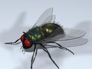 fly housefly 3d model