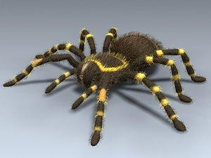 tarantula mexican red 3d model
