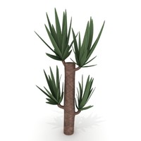 yucca plant 3ds