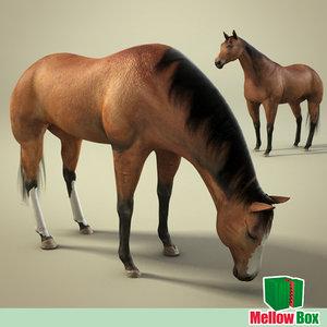 3d model horse bronco pony