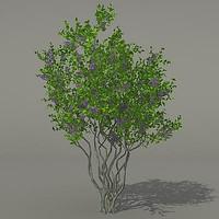 3d model of busch shrub