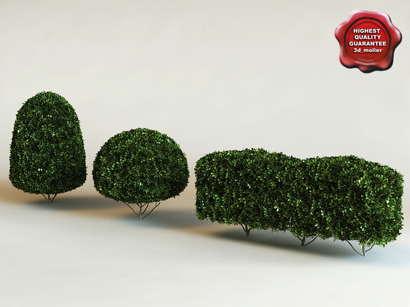 buxus microphylla 'green beauty' 3d max