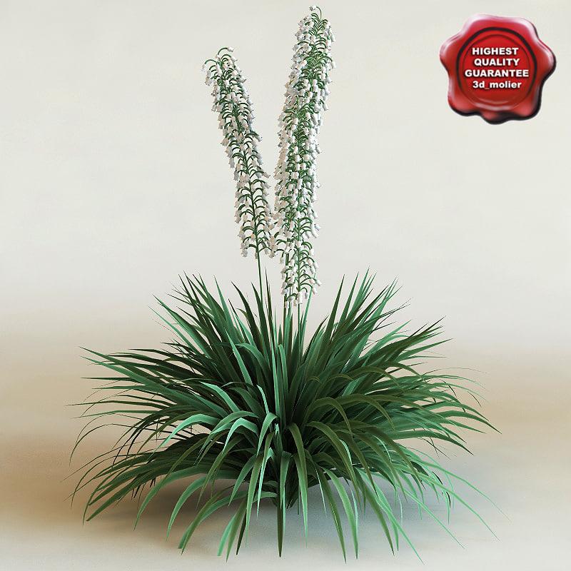 3d yucca filamentosa modelled model