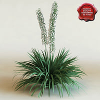 3d model of shrub Yucca Filamentosa