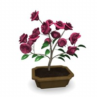 3d 3ds bonsai tree