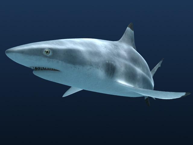 3d model reef shark