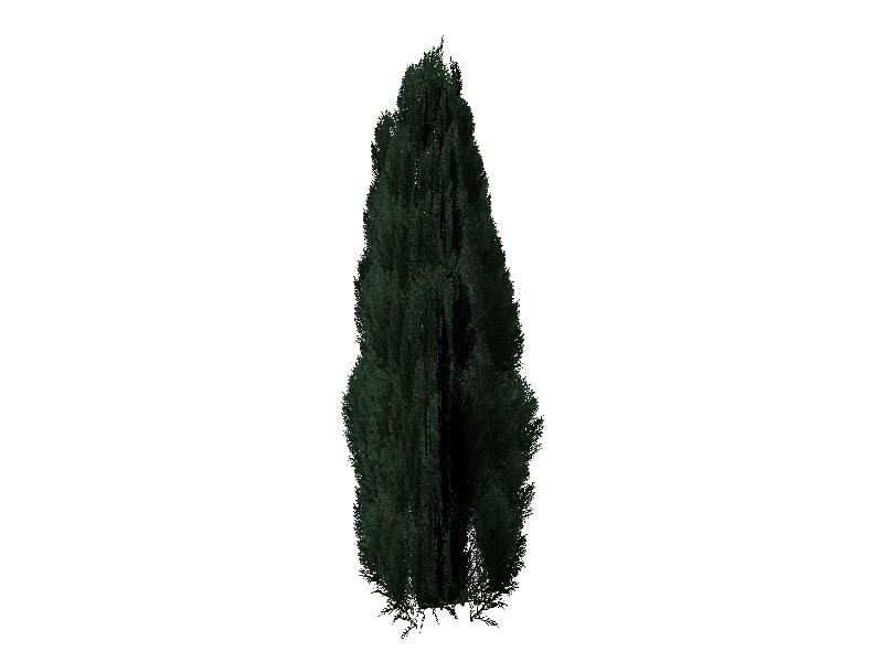 3d juniper tree plant