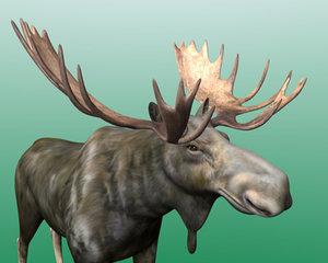 3d model of moose