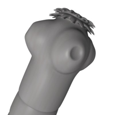 3d model of tapeworm tape worm