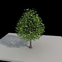 Tree-01vray.max