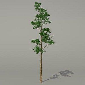 3d conifer