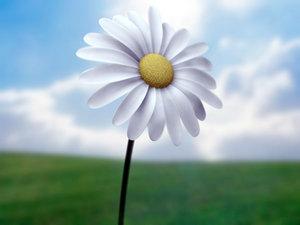 3d daisy