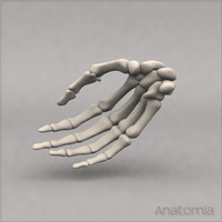 3d male human hand skeleton bone model