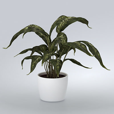 plant home 3d max