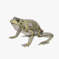 Frog with Skeleton