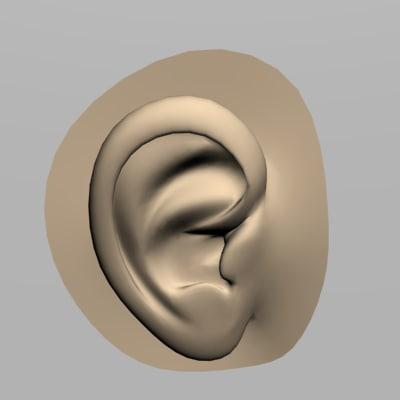 3d ear model