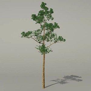 3d model conifer tree