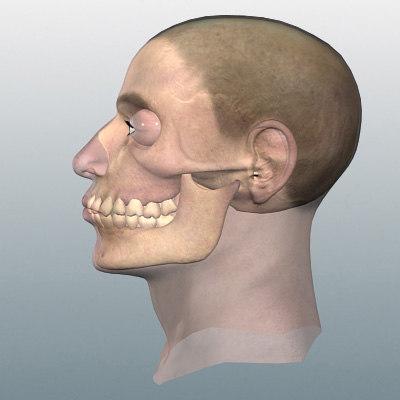 skull head 3d model