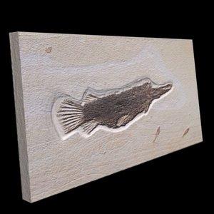 3d fossil fish model