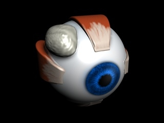 maya eye anatomical