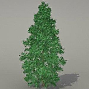 max conifer tree