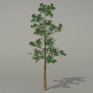 conifer tree 3d 3ds