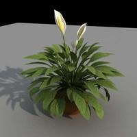 3d model small palm interior