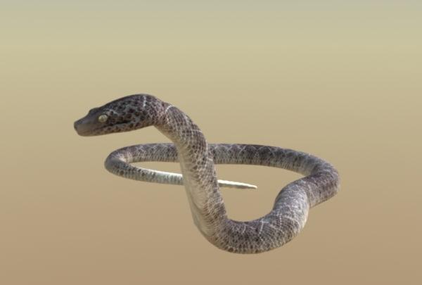 rattlesnake strike snake rattles 3d lw