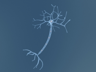 neuron cell max