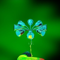 maya infusoria campanella umbellaria organism