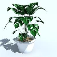 plant_03.zip