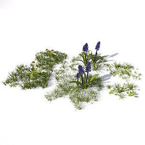 maya grass flowers