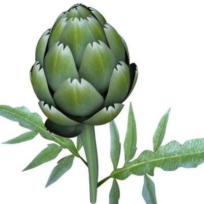 3d fbx artichoke carciofo